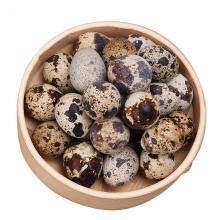 鹌鹑蛋100枚 鲜蛋宝宝孕妇辅食非鸽子蛋鹅蛋卤蛋鸭蛋鸡蛋 [100枚*1箱]