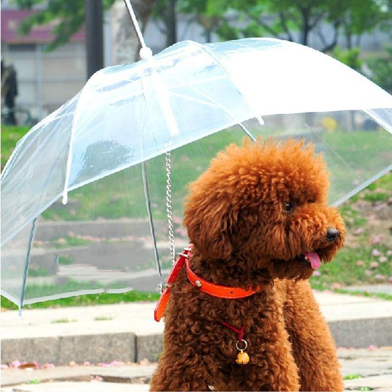 动物雨伞图片大全