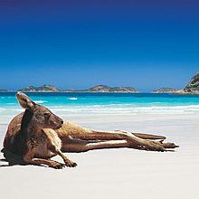 新视野国际旅行社 全国出发-澳大利亚5-30天自由行机票旅游往返含税机票 [往返澳洲自由行机票 全国-悉尼]
