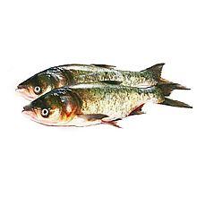 沱沱工社 琨山水产密云水库鱼—野生胖头鱼(鳙鱼) [1.75-2.25kg]