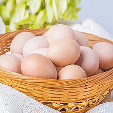 民商智惠 赫芙德大健康-九华粮品百年栗园散养40枚土鸡蛋 [40枚]