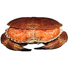 民商智惠 【产地直供】预售 进口英国面包蟹 预售时间9月19号-9月26号 [500g]