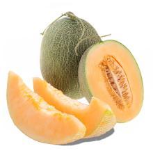 【水果】青佛蜜瓜/个