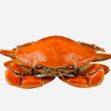 正宗三门野生青蟹(4-5只)3斤装 [1500g]