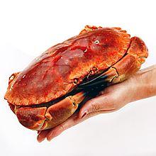 民商智惠 【工会】陈鲜生 面包蟹英国进口*2(熟冻) [500g]